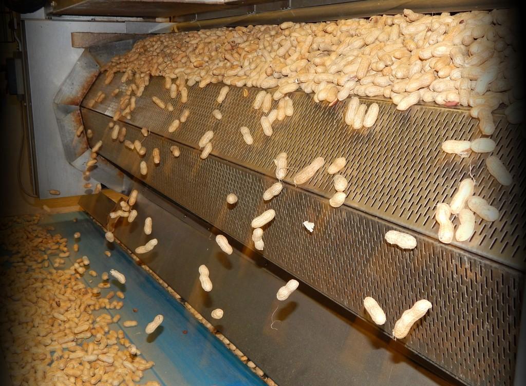 grillage des arachides coque